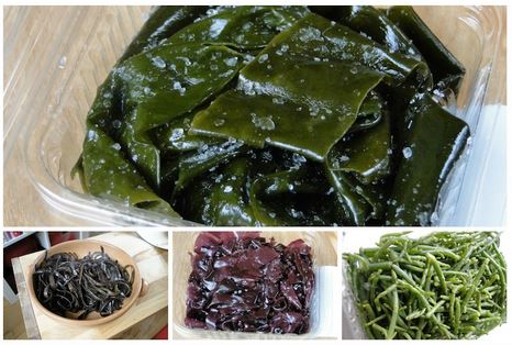 algues couleur