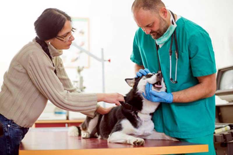 les soins v t rinaires du chien entre 2 mois et 1 an. Black Bedroom Furniture Sets. Home Design Ideas