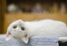 bienfaits du chat sur la santé